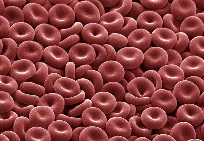 Healthy Blood Cells